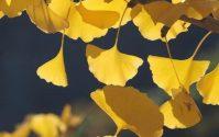 いろいろな秋🍠🍂🍁